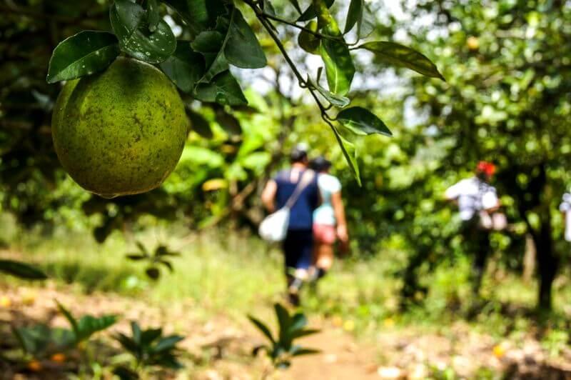 Agroturismo tours Finca Happy Fruit