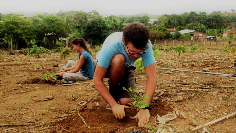 Voluntariado Internacional Finca Happy Fruit