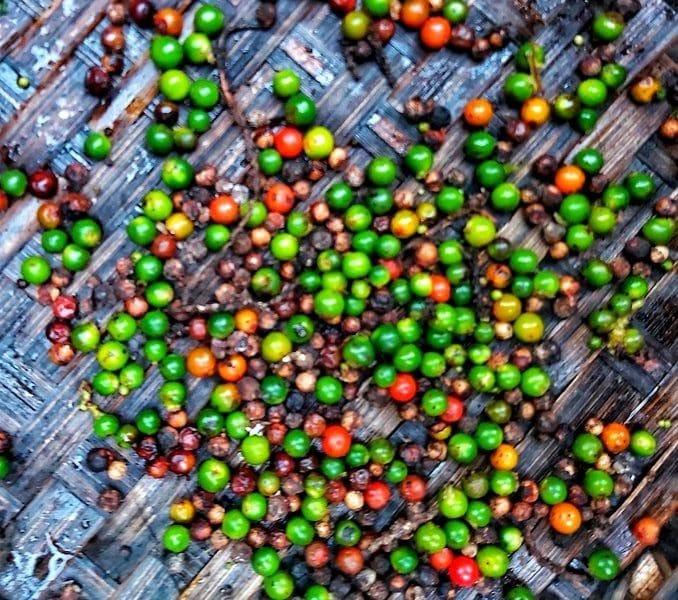 Pimienta fresca Finca Happy Fruit