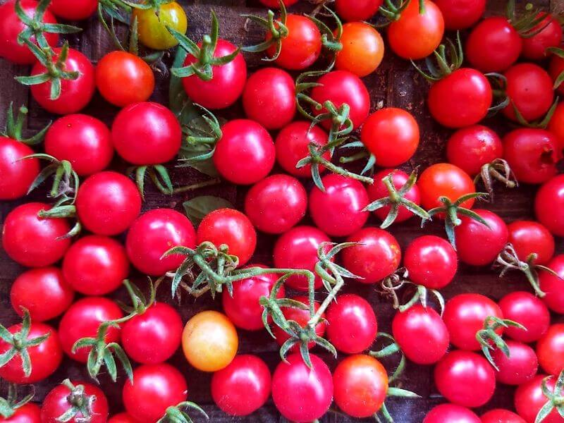 Tomatillo Tropical